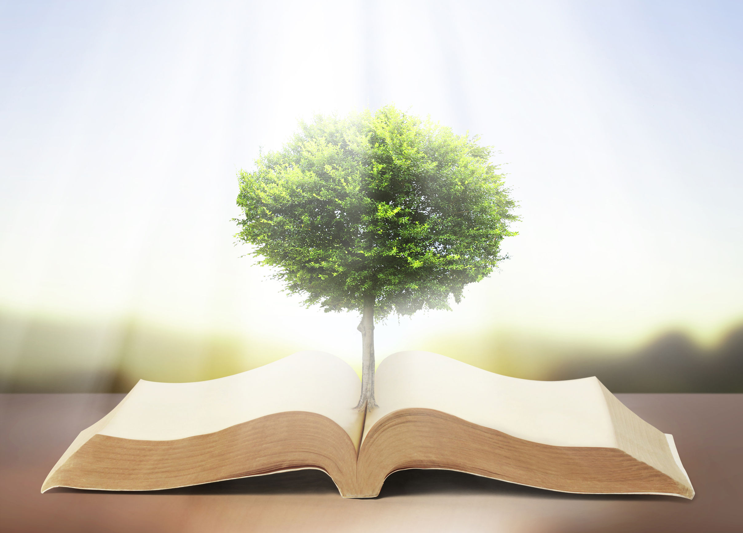 25167392 - book of nature with grass and tree growth